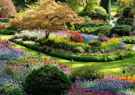 Tips-Menyiasati-Taman-Rumah-Minimalis-Supaya-Terlihat-Mempesona